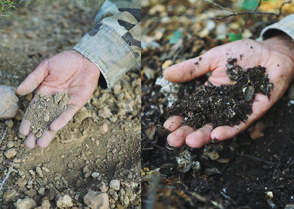 healthy and unhealthy soils compared